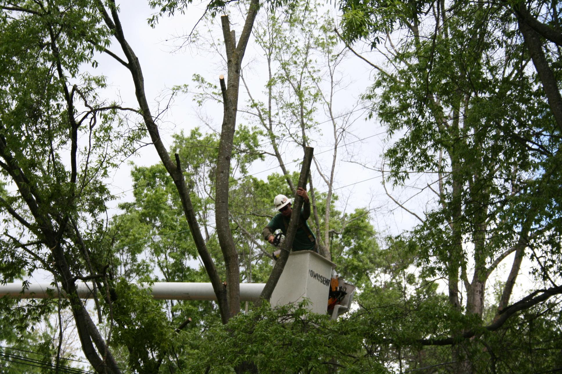 Wenatchee tree service